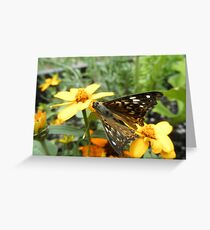 Painted Lady Butterfly On Flower Greeting Card