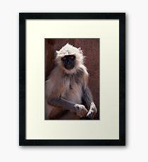 Langur Monkey at Ranthambore Fort Framed Print