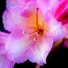 In the Pink by Debra Fedchin