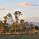 Morning at Aroona by Peter Hammer