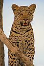 The face of mischief by Explorations Africa Dan MacKenzie