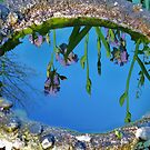 Water on the Iris on the water by Ron Russell