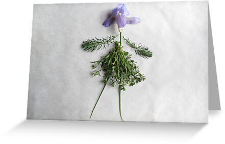 Iris  by Marianne C. Wille