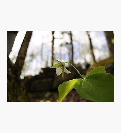 "Trillium, ""Each flower is a soul blossoming out to nature""- Gerard de Nerval Photographic Print"