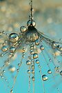 Dandy Shower by Sharon Johnstone