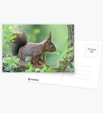 SQUIRREL DIARIES -III- Postcards