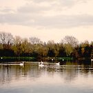 Upon Swan Lakes by LoveSMP