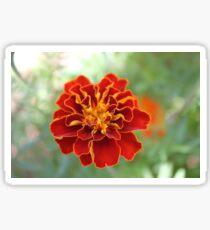 Oh! Marigold! Sticker