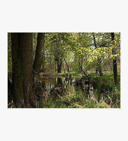 White River Landscape 6748 Photographic Print
