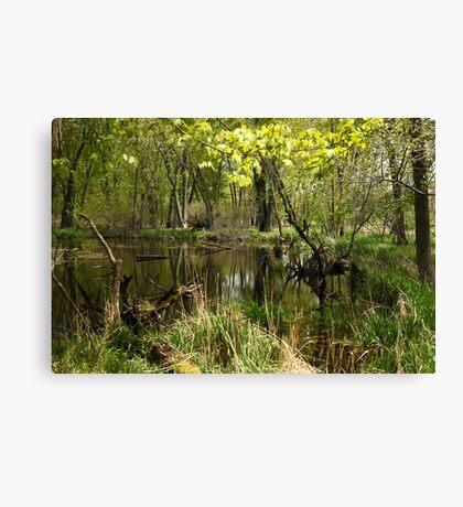 White River Landscape 6749 Canvas Print