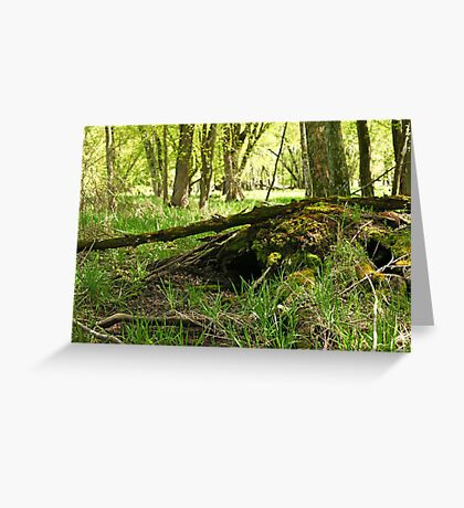 White River Marsh Landscape 6782 Greeting Card
