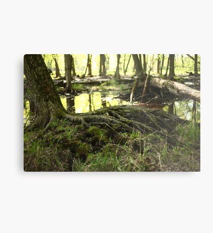 White River Marsh Landscape 6799 Metal Print