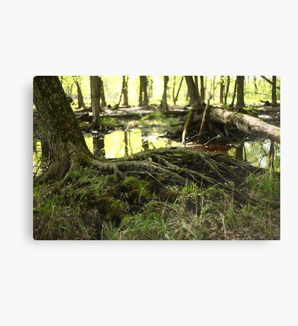 White River Marsh Landscape 6799 Canvas Print