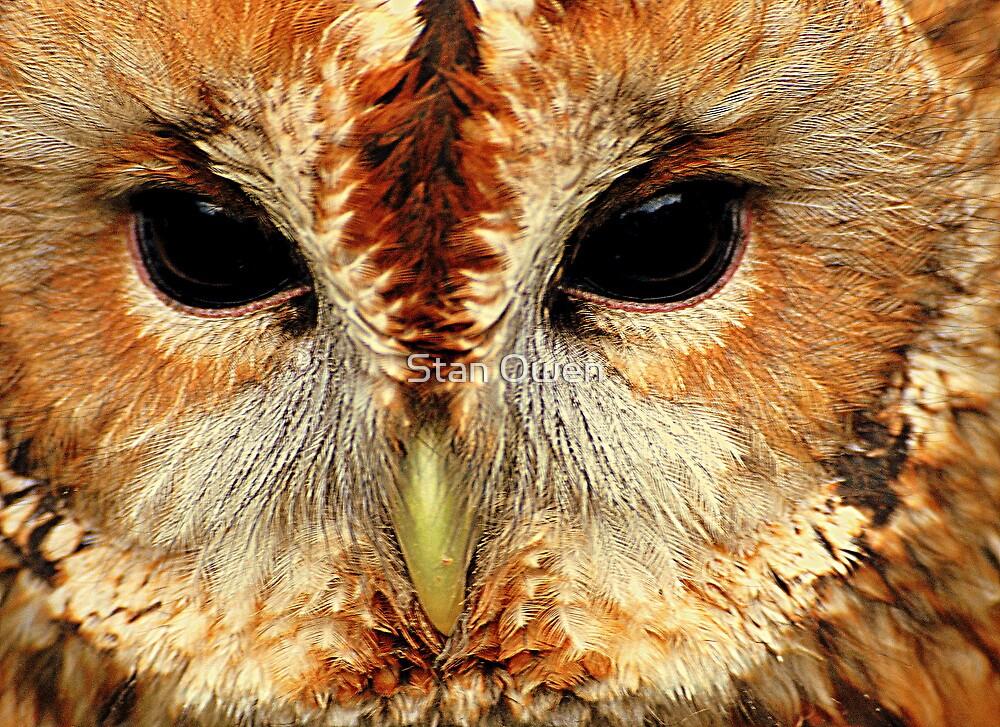Tawny Owl by Stan Owen