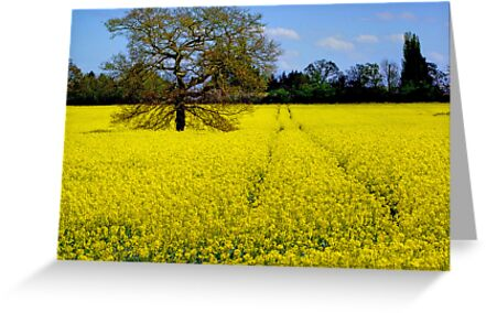 The Lone Tree by Colin  Williams Photography