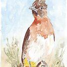 Black-eyed Bulbul (Pycnonotus barbatus) by Maree Clarkson