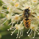 macro wasp 004 by Karl David Hill