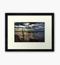 Shining Down On A Standup Tree Framed Print