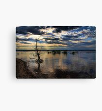 Shining Down On A Standup Tree Canvas Print