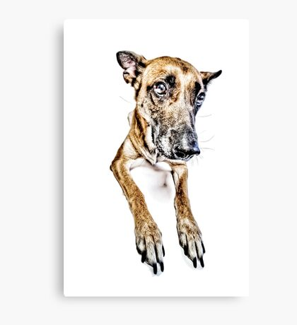 Do you looooove me? Canvas Print