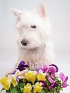 Pansies - West Highlands White Terrier  by Edward Fielding