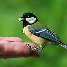 HAND FEEDING by mc27