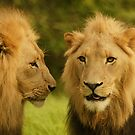 Royal Brothers by Anton Alberts