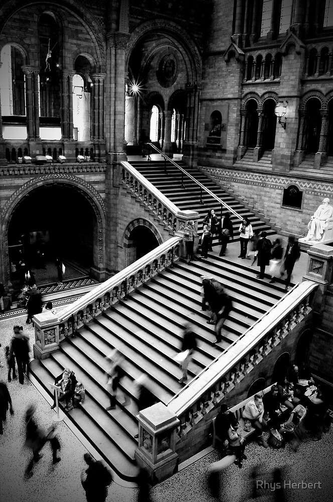 Motion - Natural History Museum by Rhys Herbert