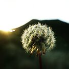 Last light. by ThePigmi