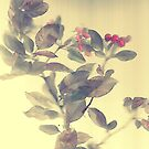 Crab apple blossoms... by linmarie