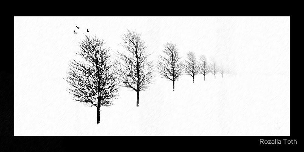 Quiet Winter by Rozalia Toth