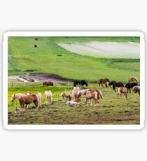 horses graze in the rolling green hills with trees Photographed in Umbria, Italy Sticker