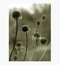 Spent Photographic Print