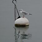 OH BUOY! by Marilyn Grimble