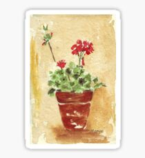 Why grow geraniums in containers? Sticker