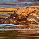 Ooey gooey by Explorations Africa Dan MacKenzie