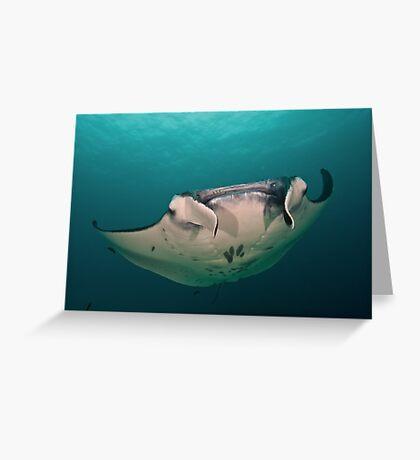 Manta Greeting Card