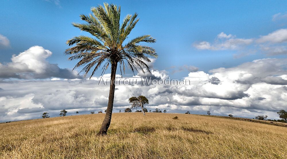Lochinvar Palm by Andrew Woodman