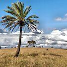 Lochinvar Palm by Andrew Woodman