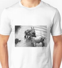 cows bathing in the river  T-Shirt