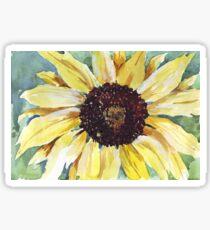 Helianthus annus (Sunflower) Sticker