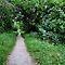 Path - Gorgeous Green