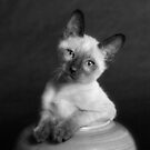 Scratch in the Pot by billyboy
