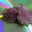 Leaf Study by John Lines