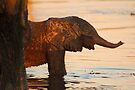 Look ma!!! by Explorations Africa Dan MacKenzie