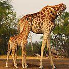 Checkin on junior by Explorations Africa Dan MacKenzie
