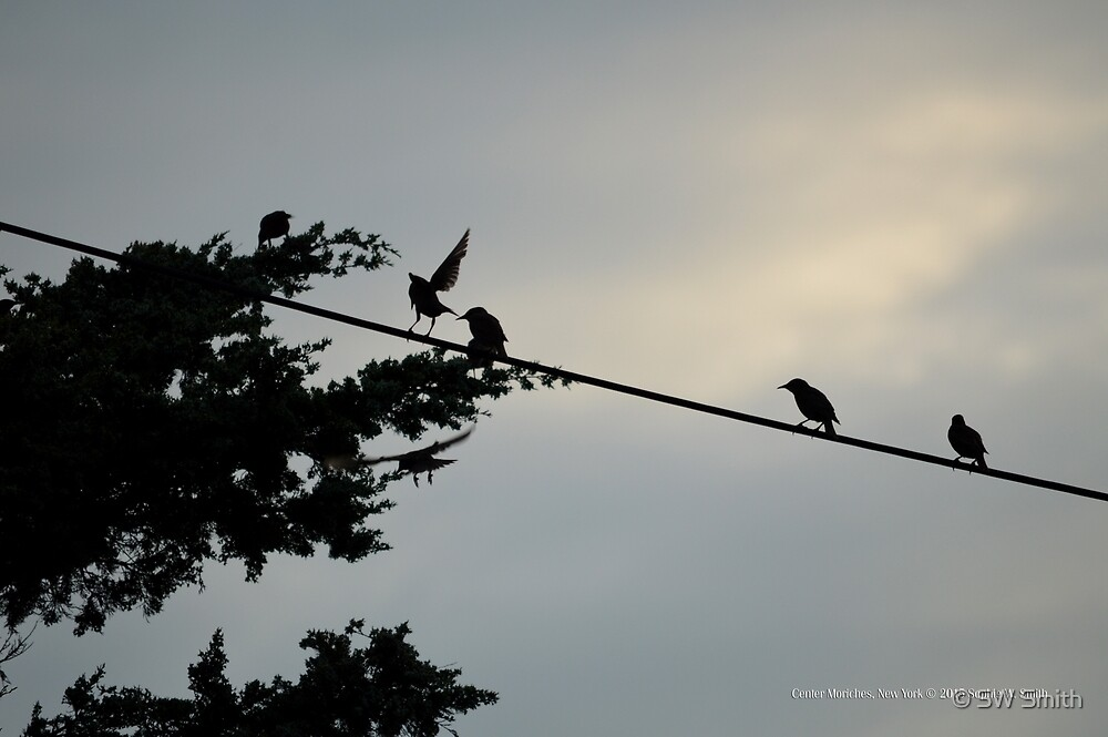 Birds On A Wire | Center Moriches, New York  by © Sophie W. Smith