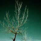 tree by Jonathan Epp