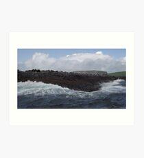 Seals on Bull Island Art Print