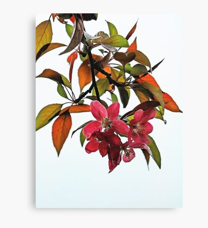 Apple Blossoms and Leaves Canvas Print
